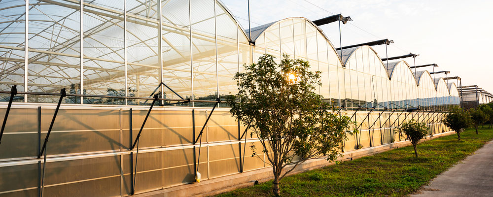 Greenhouse and Plant Propagation Cooling – France