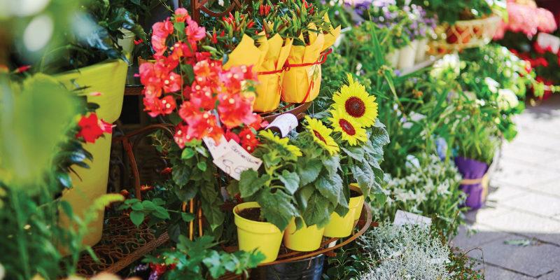 Garden Centre Cooling – Jardiland
