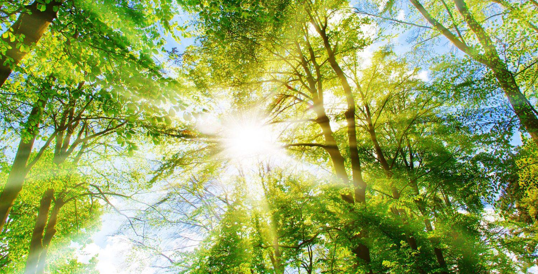 Decrease your Carbon Footprint
